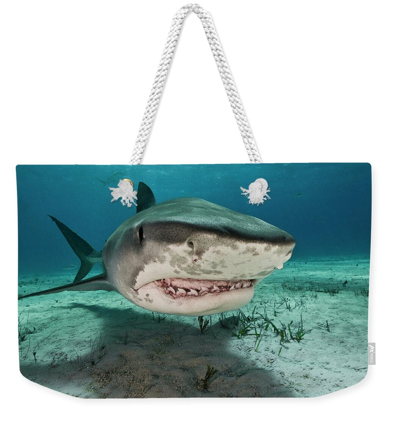 Underwater Weekender Tote Bag featuring the photograph Tiger Sharks Galeocerdo Cuvier Are by Rodrigo Friscione