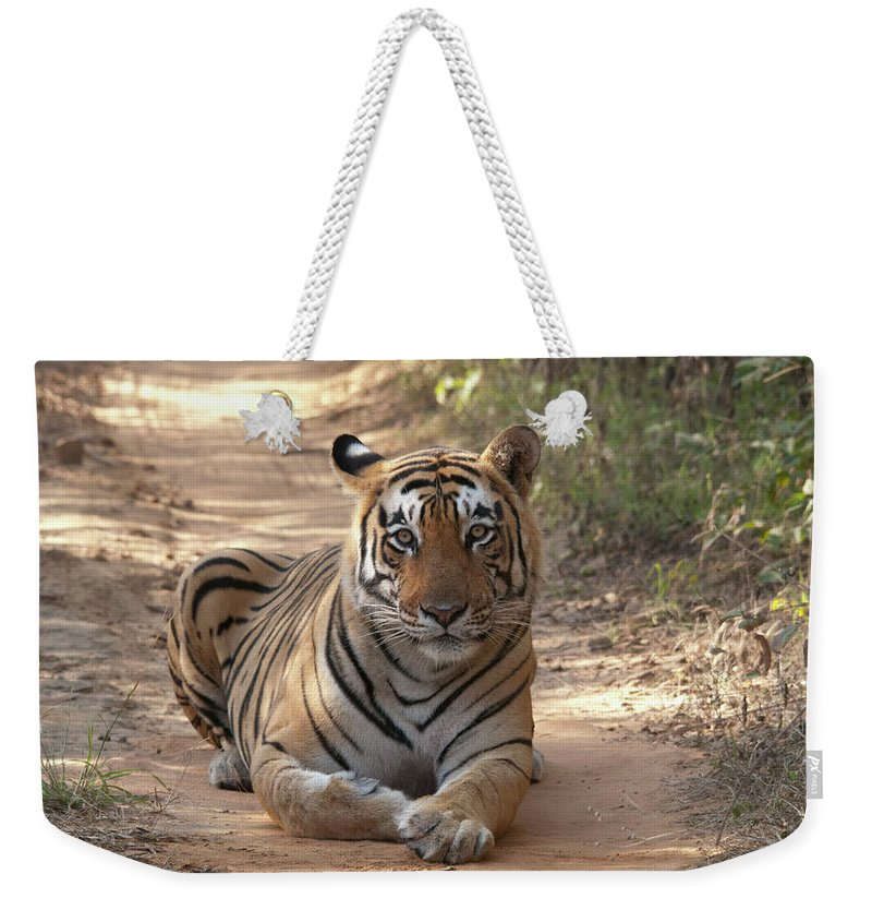Ranthambore National Park Weekender Tote Bag featuring the photograph Tiger Sitting On Field by Chaithanya Krishna Photography