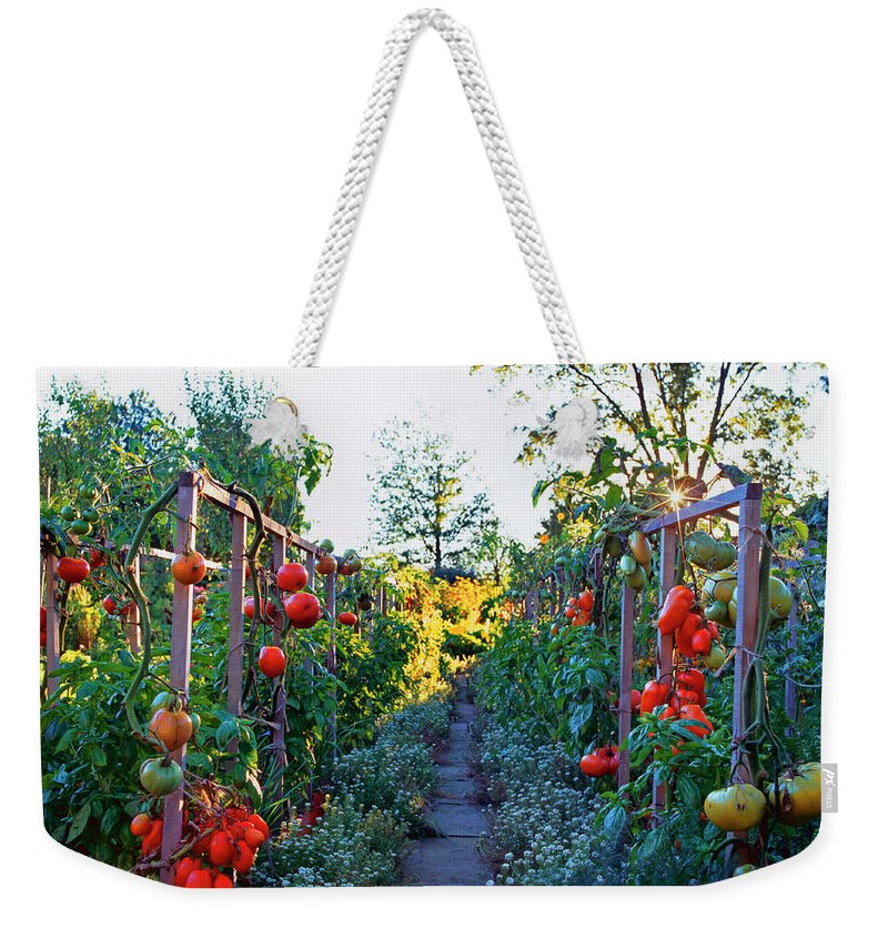 Community Garden Weekender Tote Bag featuring the photograph Tomatoes On Frames by Richard Felber