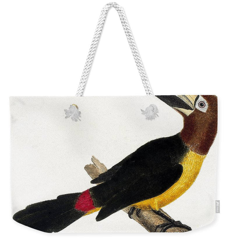 Toucan Weekender Tote Bag featuring the painting Toucan by European School