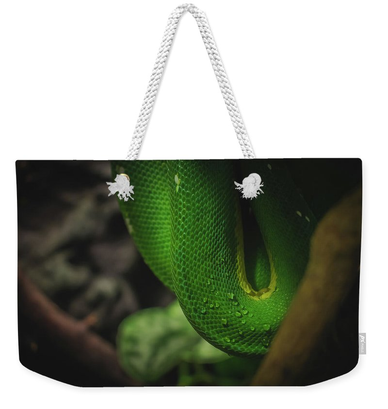 Green Weekender Tote Bag featuring the photograph Tree Snake by Valerie Kingston