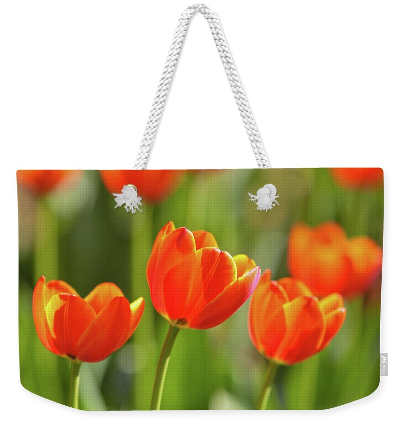 Flowerbed Weekender Tote Bag featuring the photograph Tulip by Ithinksky