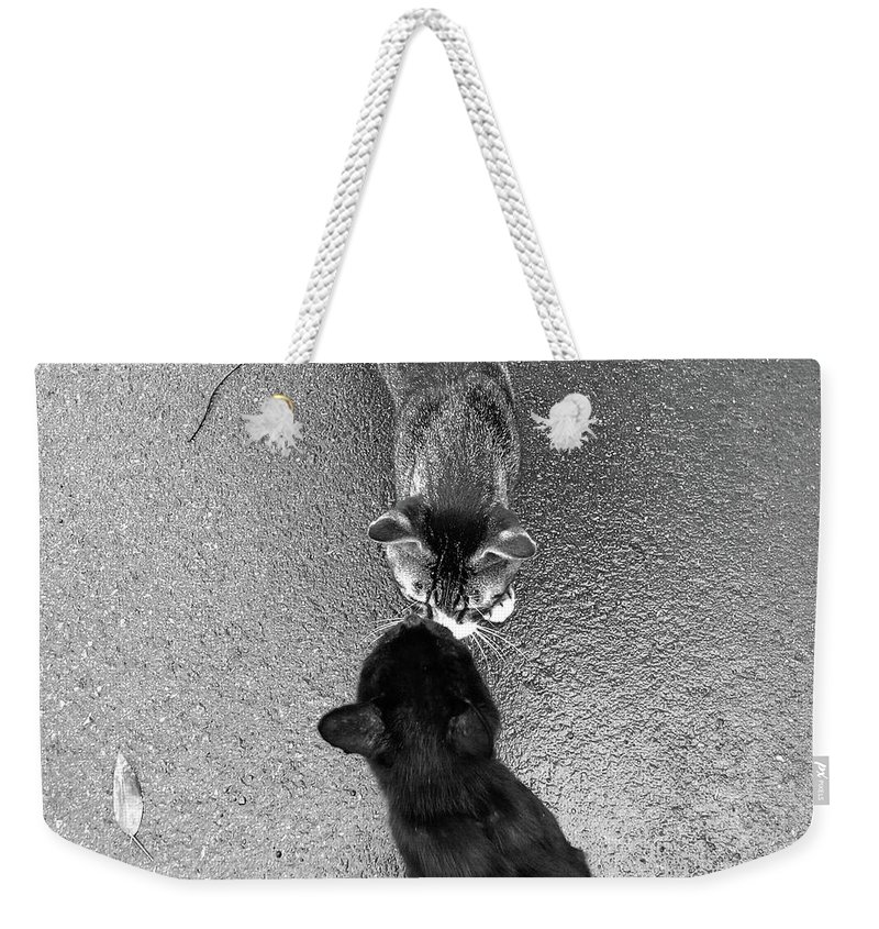 Pets Weekender Tote Bag featuring the photograph Two Kittens Which Kiss by Photographer, Loves Art, Lives In Kyoto