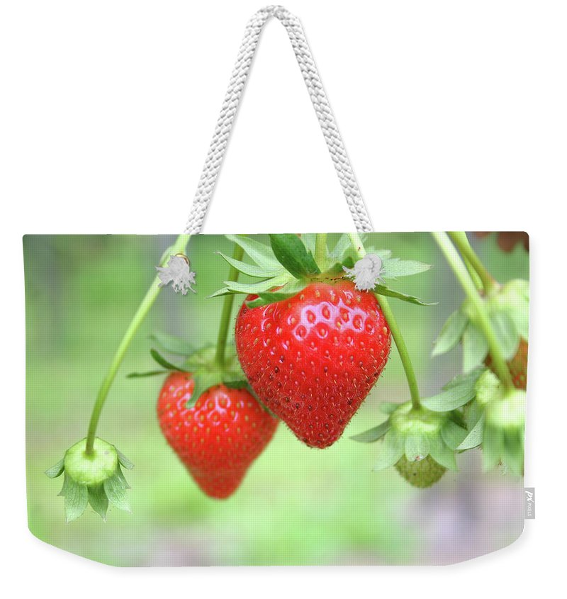 Juicy Weekender Tote Bag featuring the photograph Two Ripe Red Strawberries On The Vine by Hohenhaus
