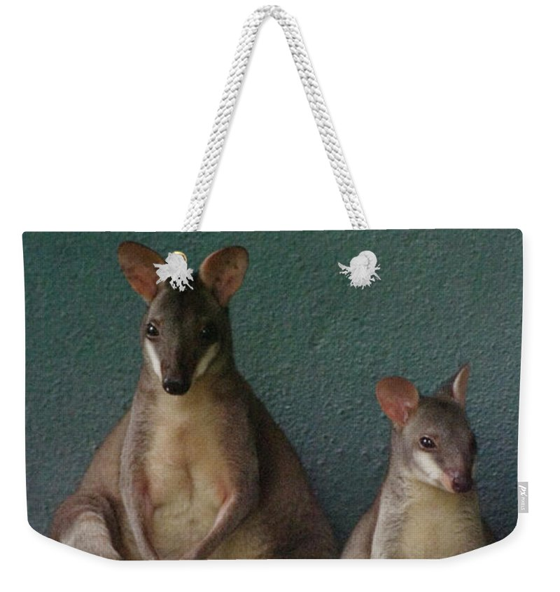 Animal Themes Weekender Tote Bag featuring the photograph Two Sitting Wallabies by Ming Thein / Mingthein.com