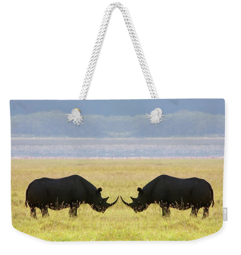 Animal Themes Weekender Tote Bag featuring the photograph Two White Rhinoceros Face To Face On by Grant Faint