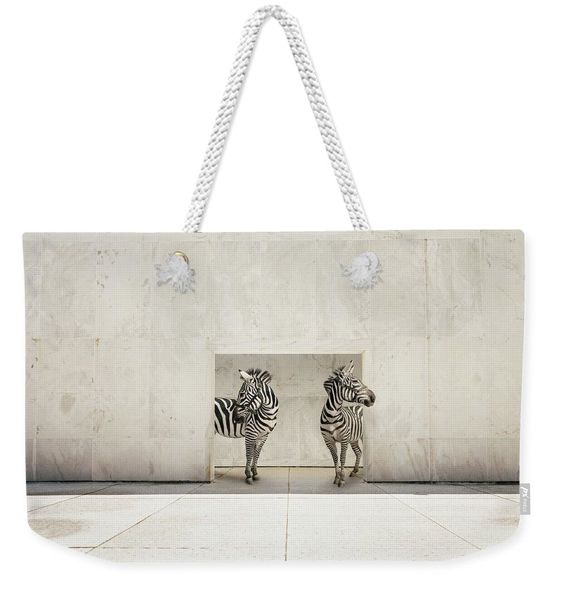Out Of Context Weekender Tote Bag featuring the photograph Two Zebras At Doorway Of Large White by Matthias Clamer