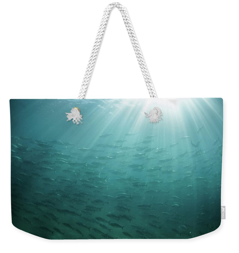 Freedom Weekender Tote Bag featuring the photograph Underwater Light by Mark Tipple