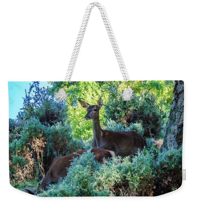 Deer Weekender Tote Bag featuring the photograph Up And Down by Borja Robles