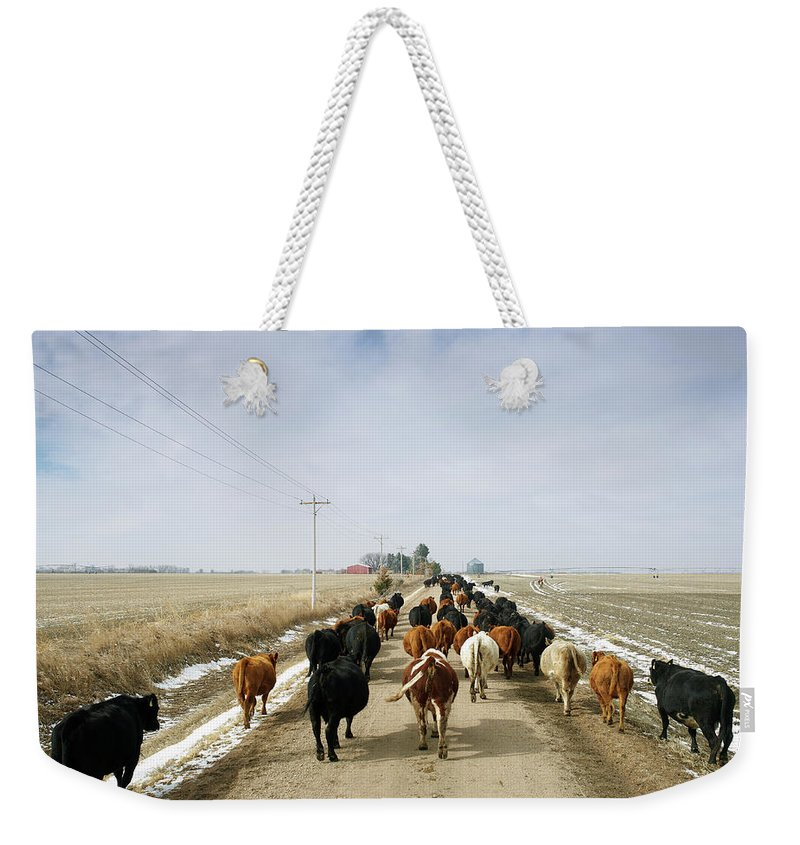 Cattle Drive Weekender Tote Bag featuring the photograph Usa, Nebraska, Great Plains, Herd Of by John Kelly