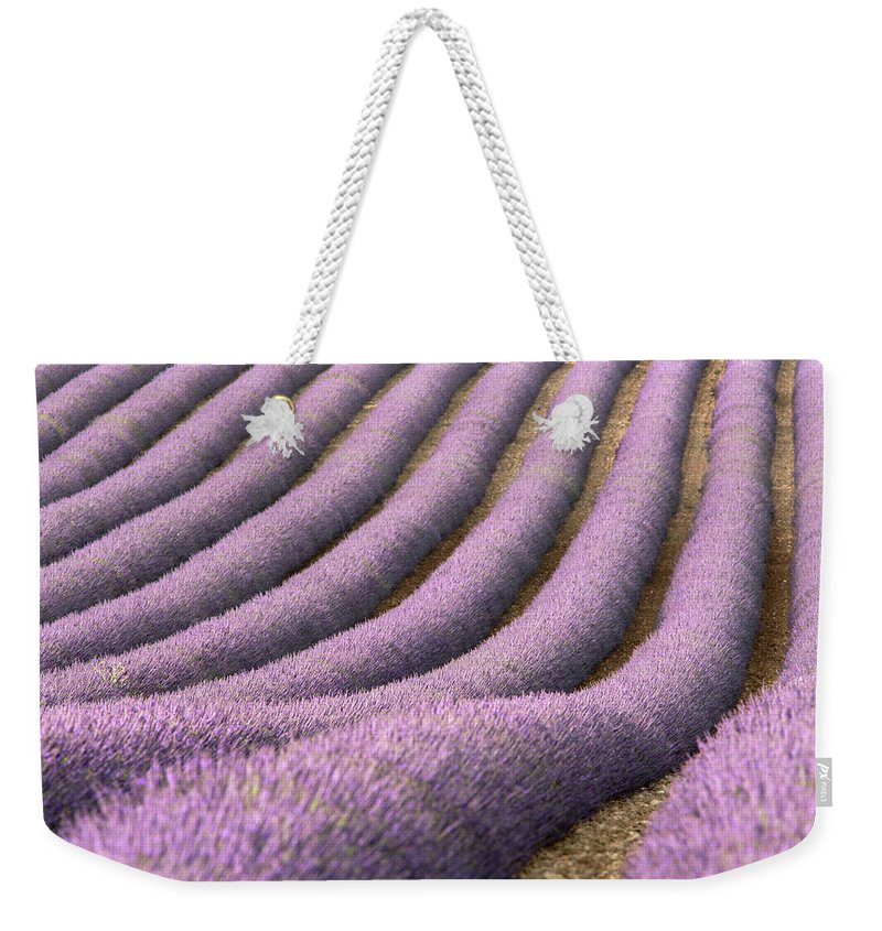 In A Row Weekender Tote Bag featuring the photograph View Of Cultivated Lavender Field by Michele Berti