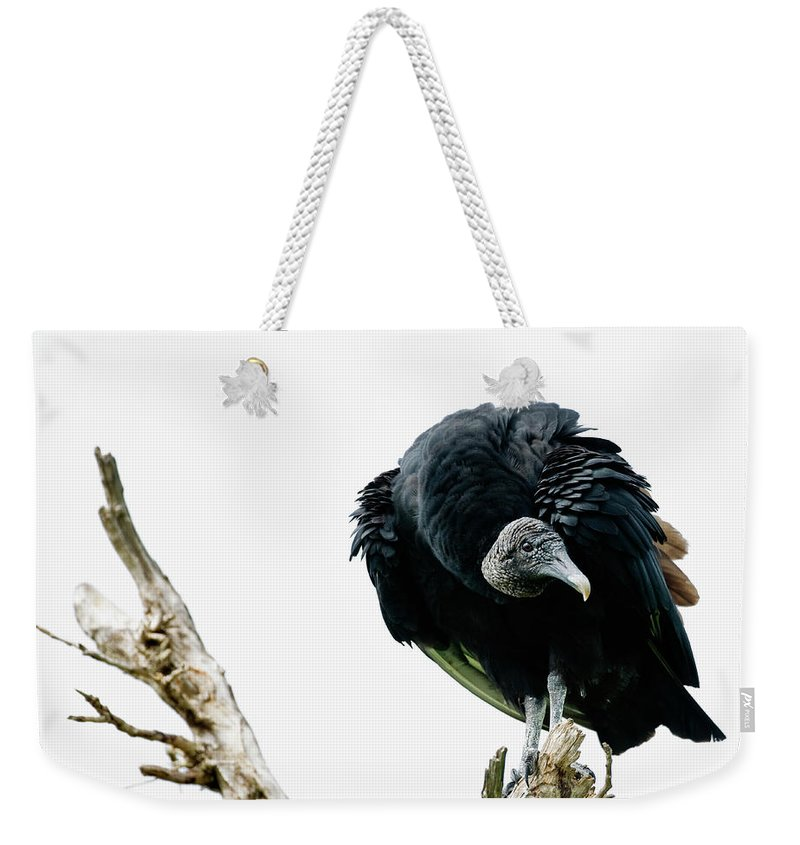 Animal Themes Weekender Tote Bag featuring the photograph Vulture Perched On Tree by Roine Magnusson