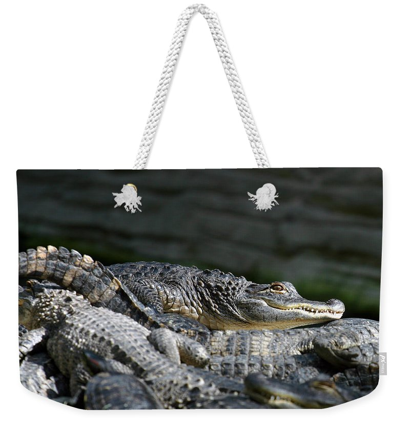 Alligator Weekender Tote Bag featuring the photograph Watchfull Eye by Anthony Jones