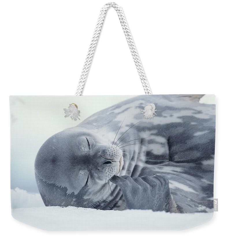 One Animal Weekender Tote Bag featuring the photograph Weddell Seal Leptonychotes Weddellii by Eastcott Momatiuk