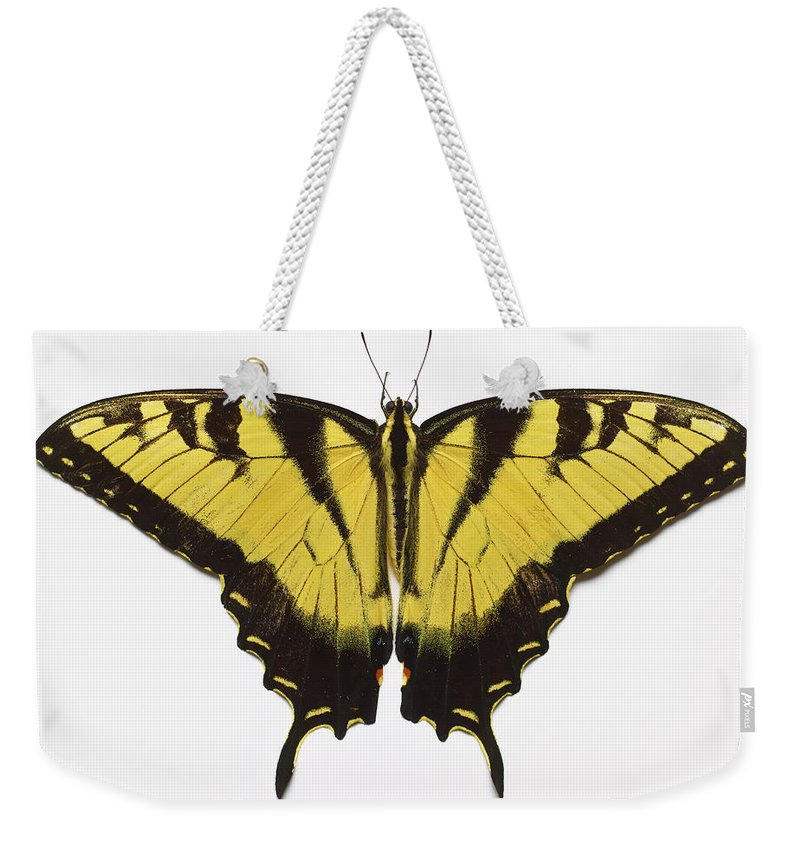 White Background Weekender Tote Bag featuring the photograph Western Tiger Swallowtail Butterfly by Don Farrall