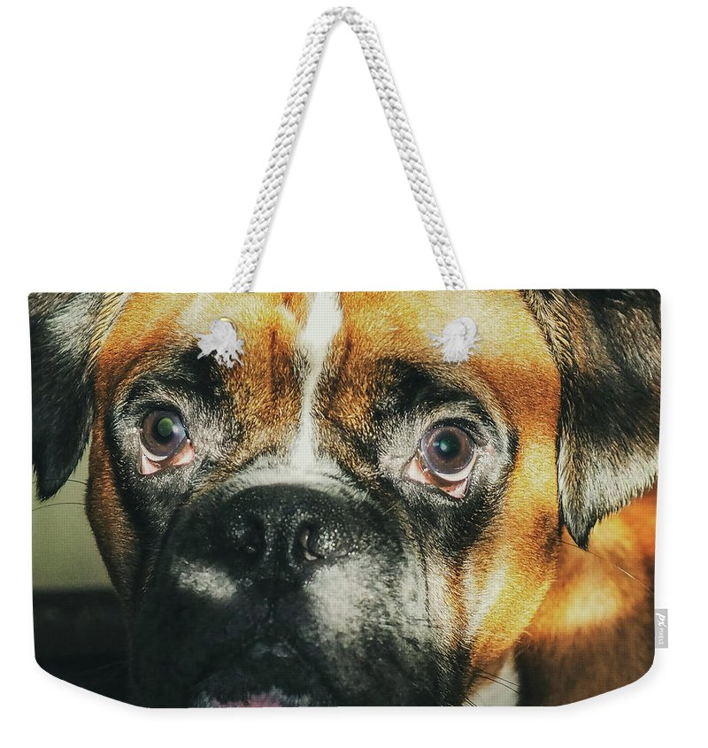 Dog Weekender Tote Bag featuring the photograph Where'd Everybody Go by CWinslow Shafer