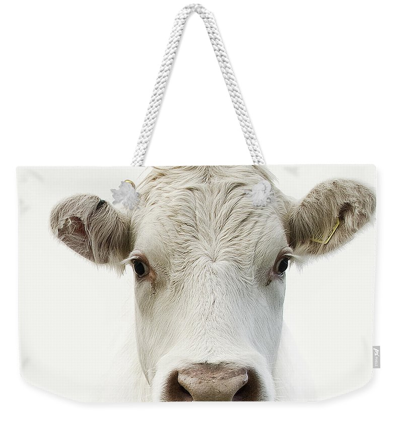 White Background Weekender Tote Bag featuring the photograph White Cow by Jojo1 Photography