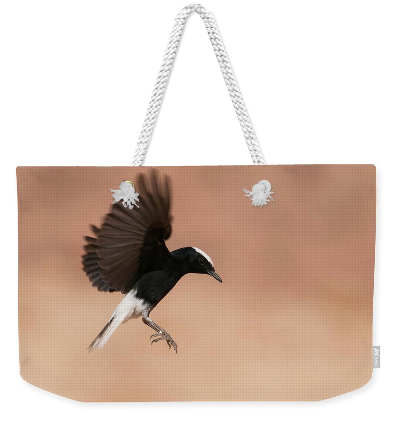 Eilat Weekender Tote Bag featuring the photograph White Crowned Wheatear by Dorit Bar-zakay