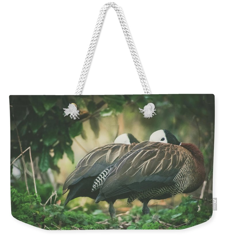 Duck Weekender Tote Bag featuring the photograph White Faced Whistling Ducks by Valerie Kingston