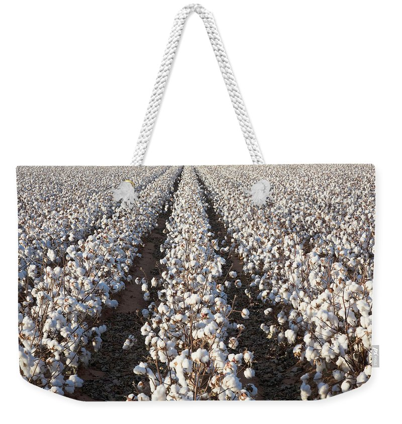 Scenics Weekender Tote Bag featuring the photograph White Ripe Cotton Crop Plants Rows by Dszc