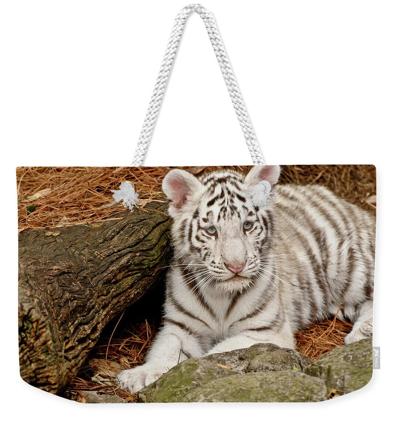 White Tiger Weekender Tote Bag featuring the photograph White Tiger Cub by Empphotography