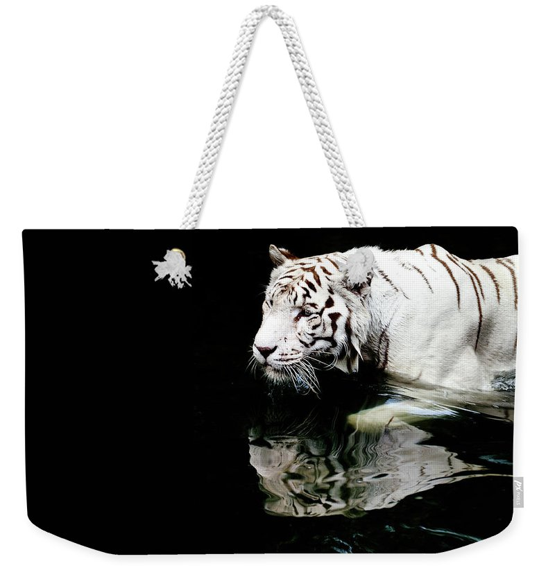 Three Quarter Length Weekender Tote Bag featuring the photograph White Tiger In Water by Carlina Teteris