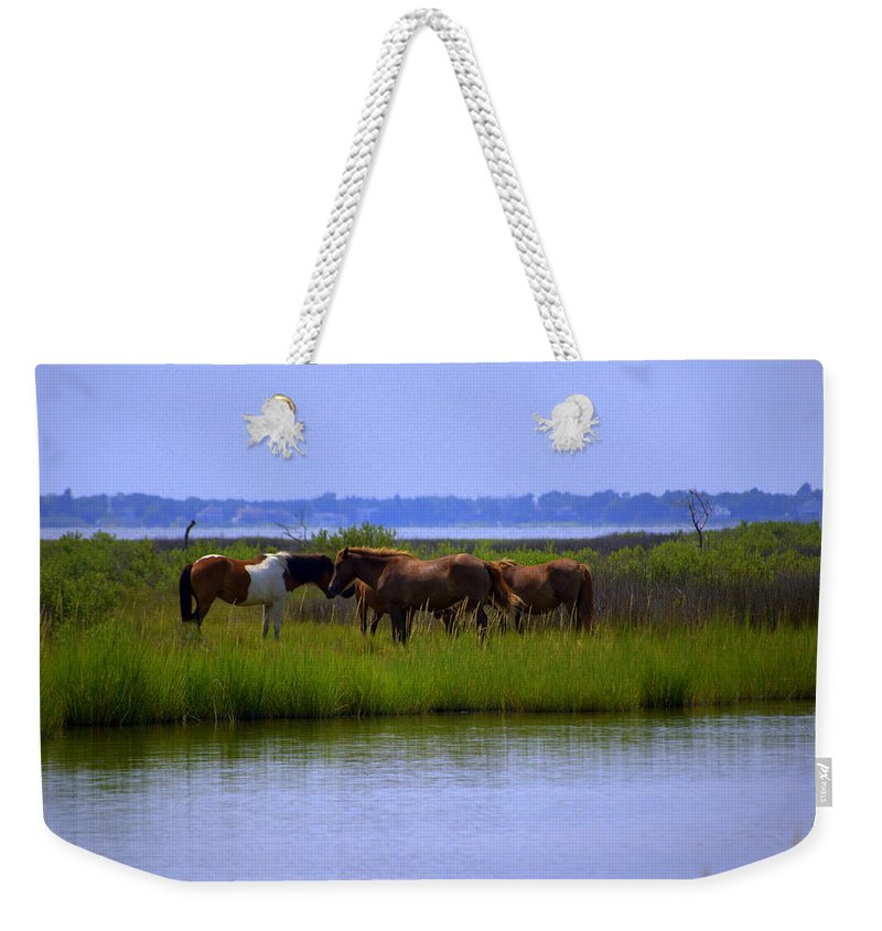 Horse Weekender Tote Bag featuring the photograph Wild Horses Of Assateague Island by Robin Houde Photography