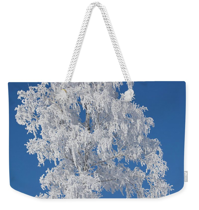 Scenics Weekender Tote Bag featuring the photograph Winter Birch Tree by Luvo