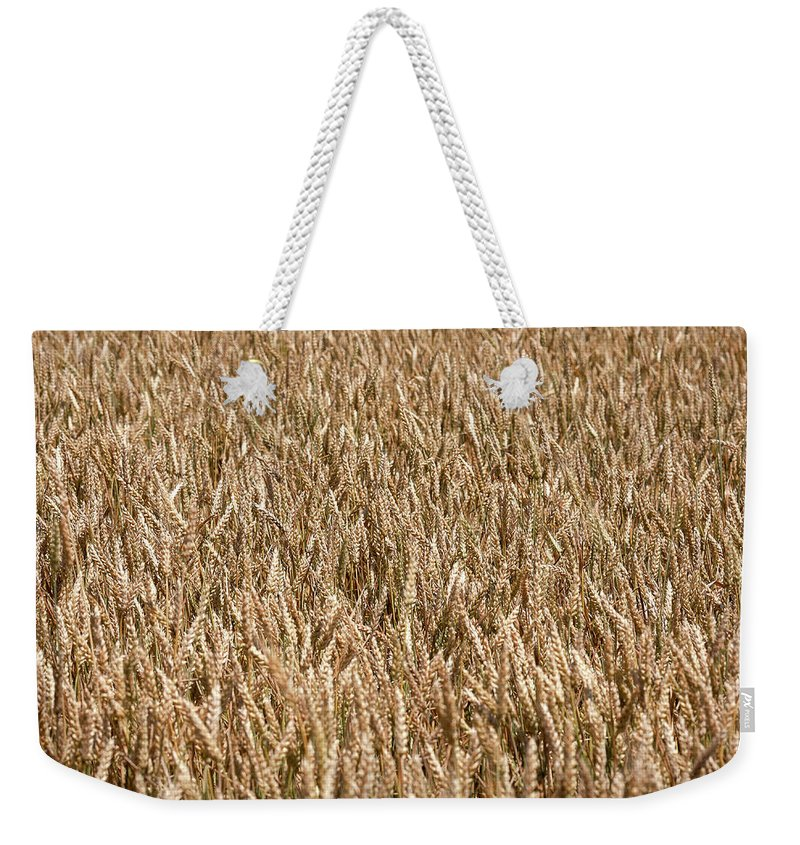 Field Weekender Tote Bag featuring the photograph Wonderful Wheat by Todd Klassy