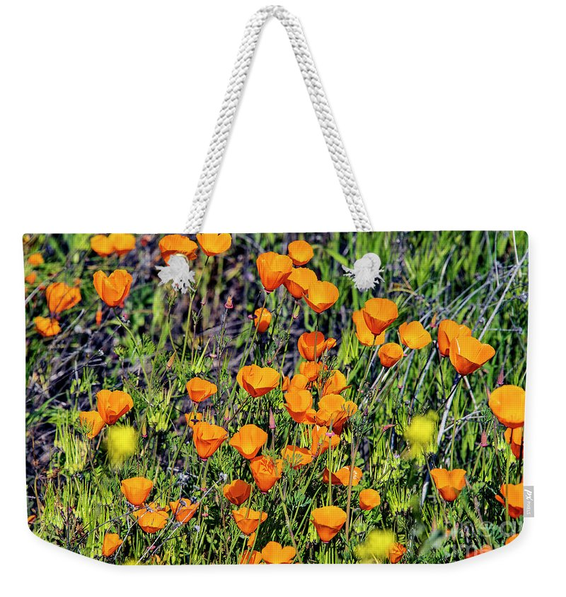 Yellow Poppies Of California Weekender Tote Bag featuring the photograph Yellow Poppies Of California by Mae Wertz