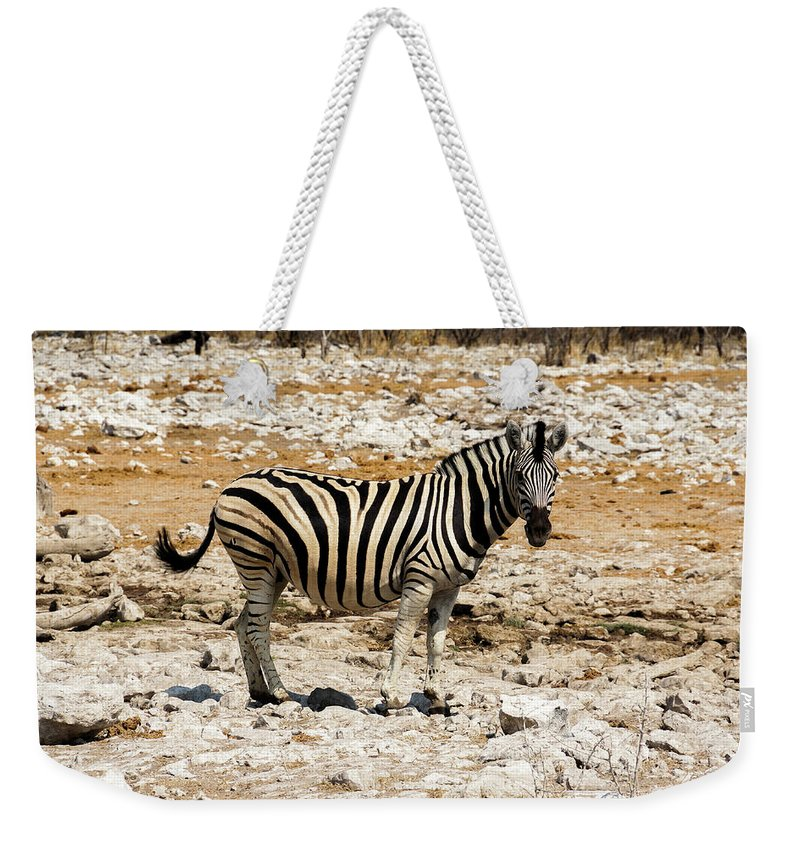Animal Themes Weekender Tote Bag featuring the photograph Zebra And White Rocks by Taken By Chrbhm
