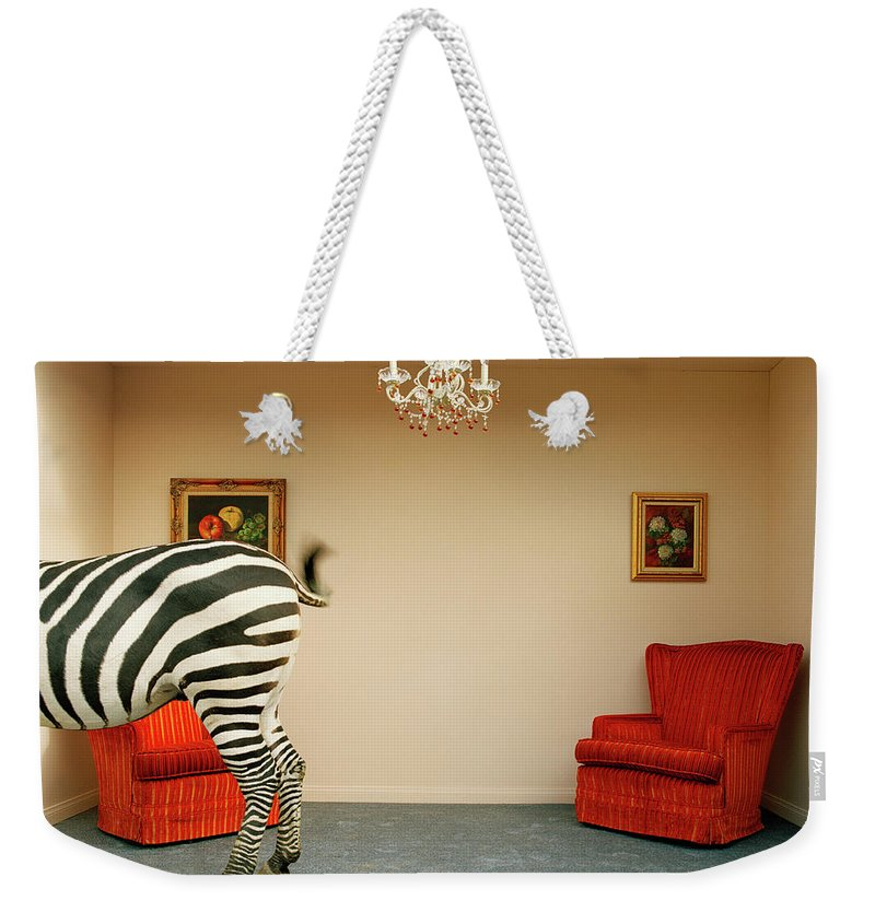 Out Of Context Weekender Tote Bag featuring the photograph Zebra In Living Room Swishing Tail by Matthias Clamer