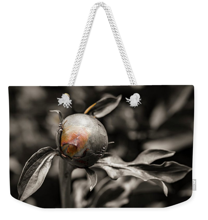 America Weekender Tote Bag featuring the photograph Zombie Flower Attacked By Ants by ProPeak Photography
