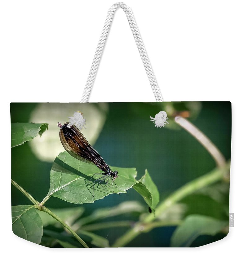 Insects Weekender Tote Bag featuring the photograph 20-0621-0645 by Anthony Roma
