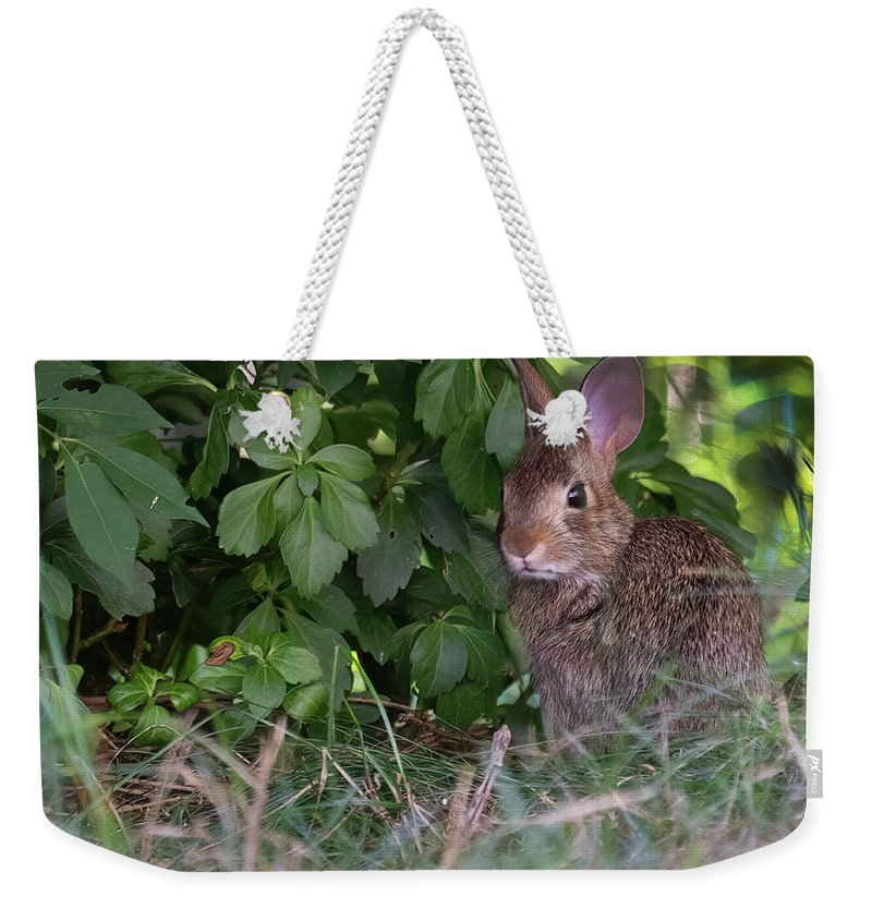 Weekender Tote Bag featuring the photograph Baby Bunny by ChelleAnne Paradis