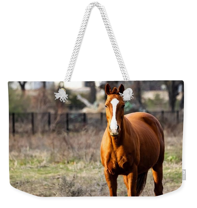 Horse Weekender Tote Bag featuring the photograph Bay Horse 3 by C Winslow Shafer