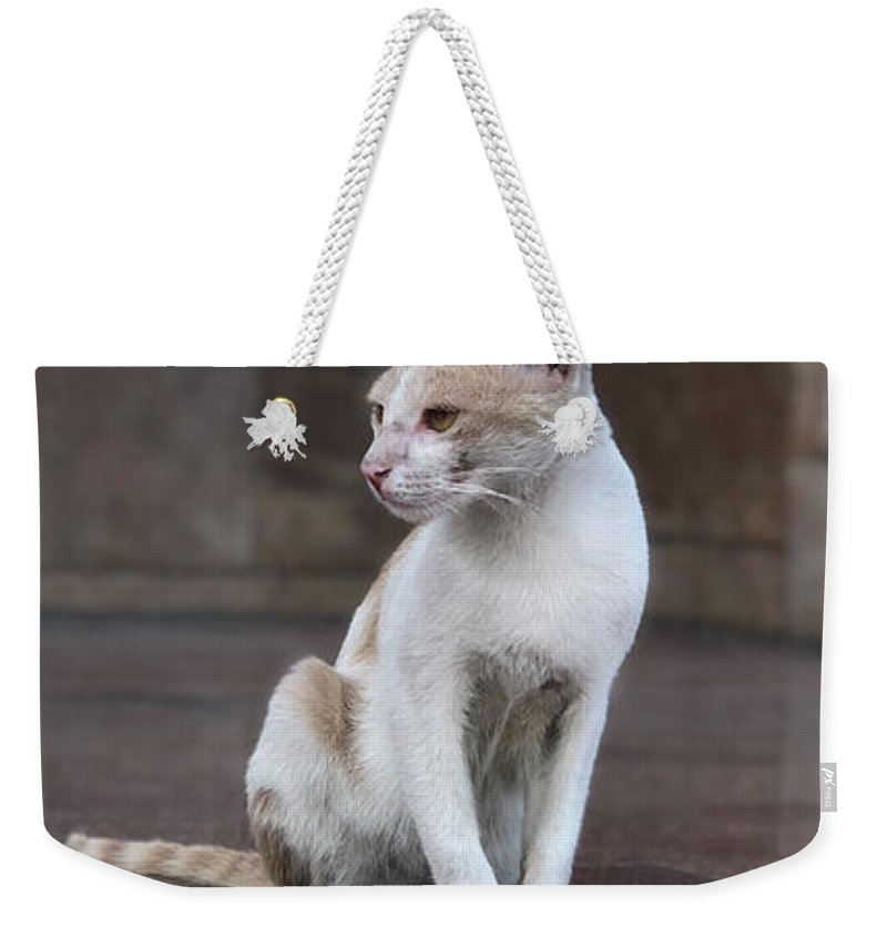 Wallpaper Weekender Tote Bag featuring the photograph Cat Sitting On Marble Floor by Prashant Dalal