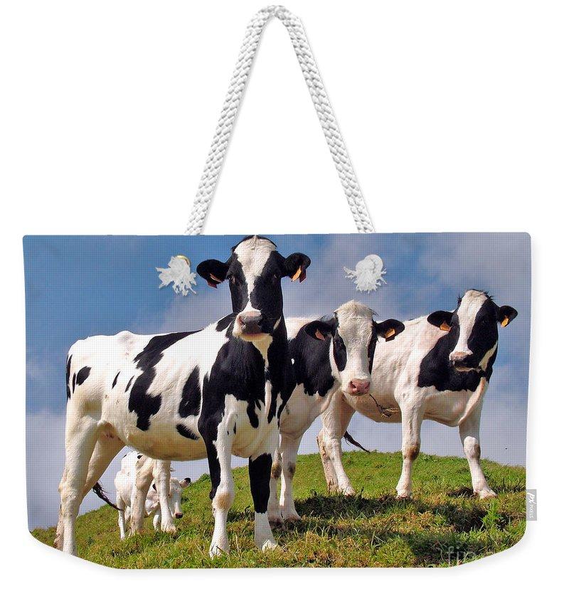 Cow Weekender Tote Bags