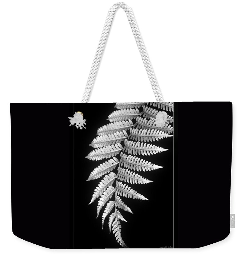 Australia; Floral Weekender Tote Bag featuring the photograph Fern Dance by Holly Kempe