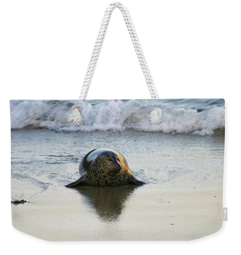 Harbor Seal Weekender Tote Bag featuring the photograph Harbor Seal in Golden Light by Anthony Jones