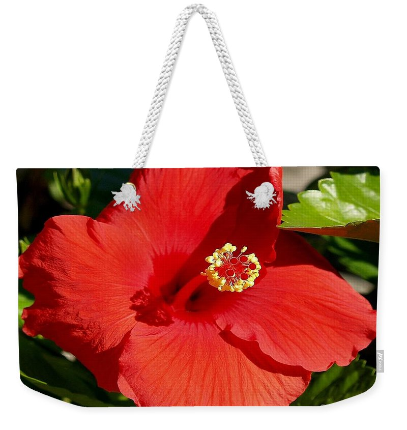 Fine Art Photography Weekender Tote Bag featuring the photograph Leila by Patricia Griffin Brett