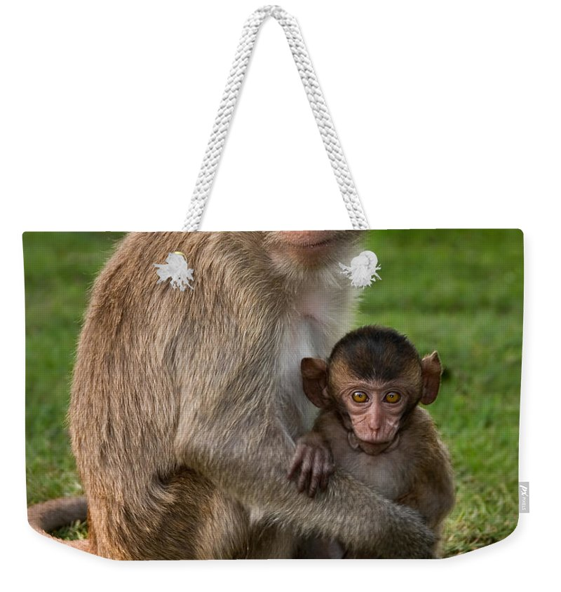 3scape Weekender Tote Bag featuring the photograph Macaque Monkey Family by Adam Romanowicz