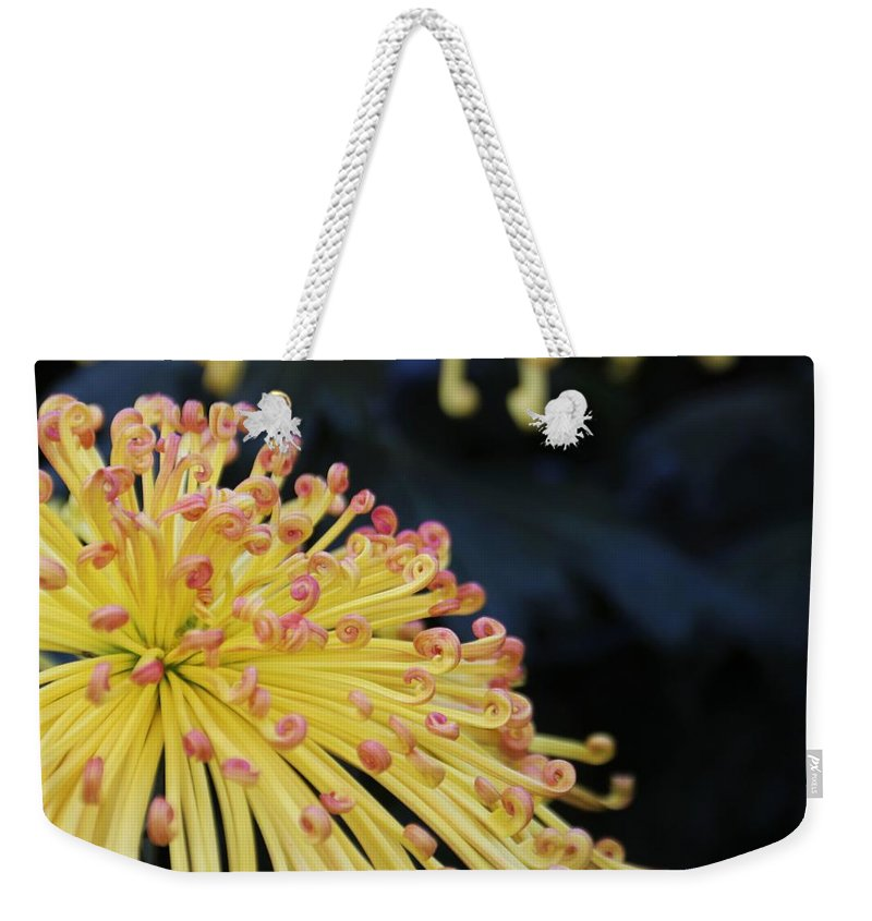 Nature Weekender Tote Bag featuring the photograph Mum's Not The Word by Larry Kniskern