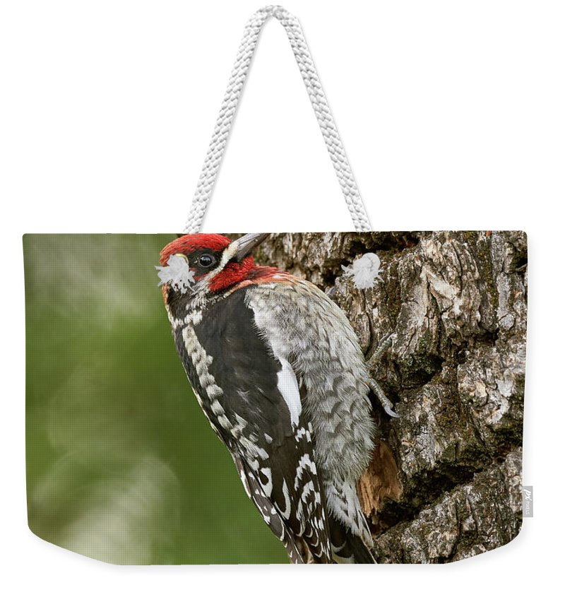 Birds Weekender Tote Bag featuring the photograph Red-breasted Sapsucker, Sacramento County California by Doug Herr