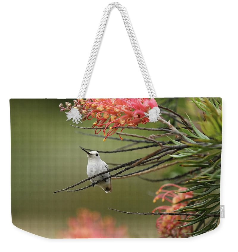 Nature Weekender Tote Bag featuring the photograph Spirit Of The Woods 2 by Erick Castellon