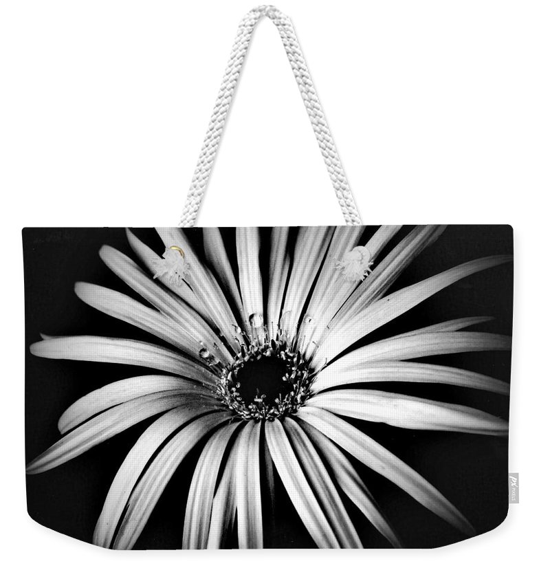 Photo Weekender Tote Bag featuring the photograph Star by Alex Caminker