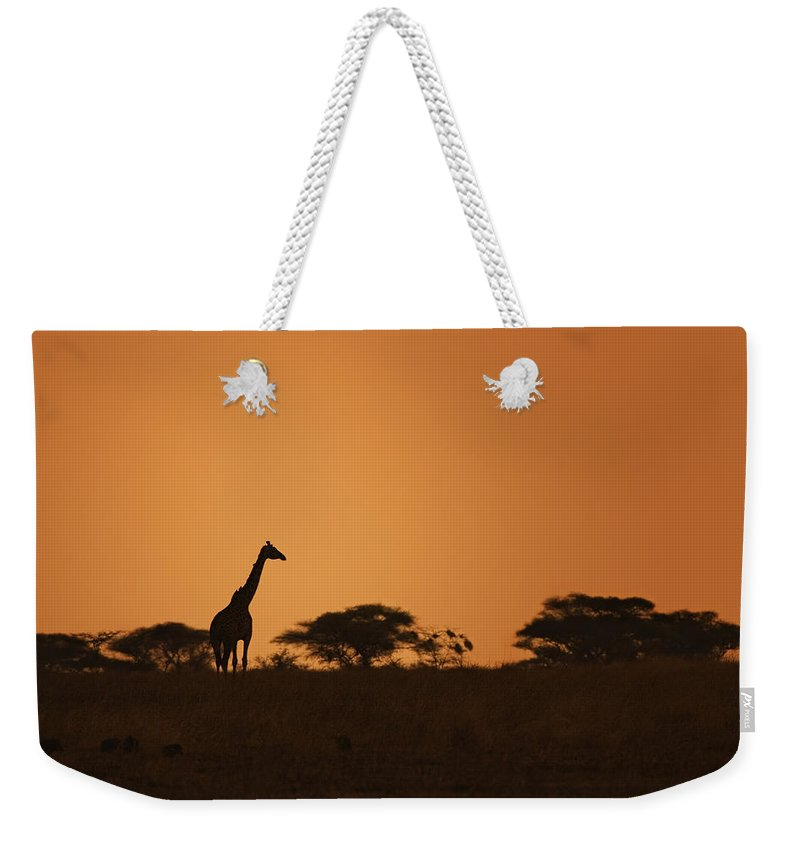 3scape Weekender Tote Bag featuring the photograph Sunset Over Tarangire by Adam Romanowicz