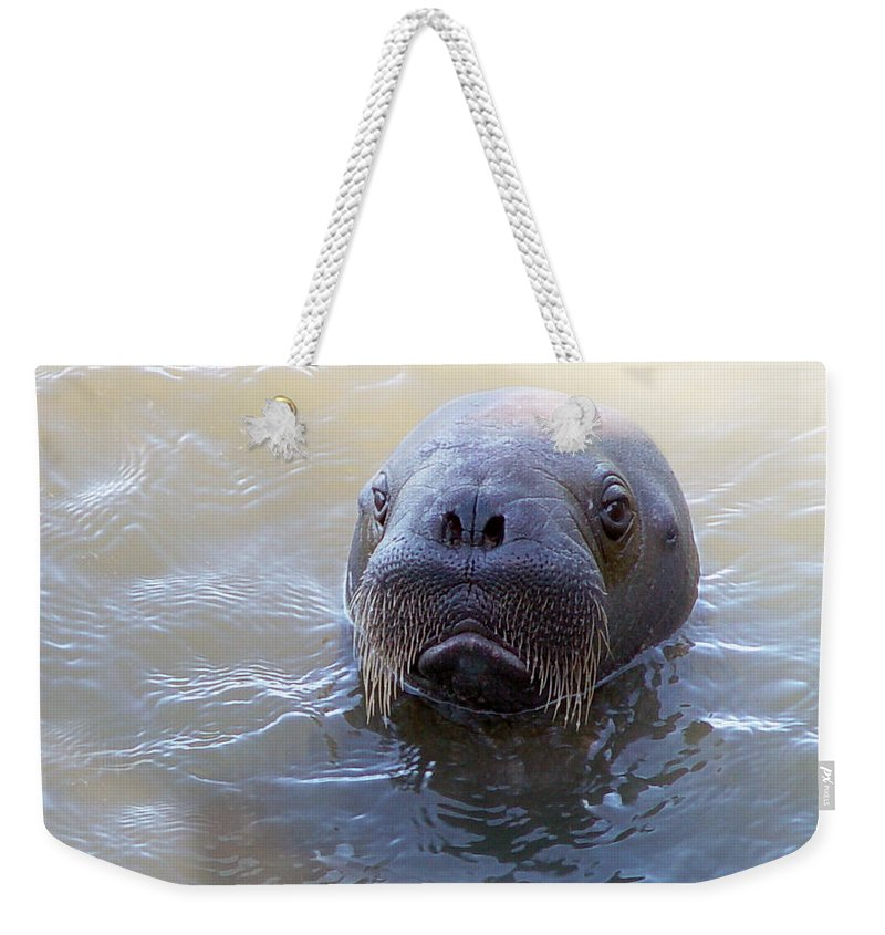 Walrus Weekender Tote Bag featuring the photograph Walrus Calve Portrait by Anthony Jones