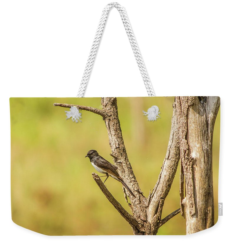 Wildlife Weekender Tote Bag featuring the photograph Willie Wagtail Woodland by Jorgo Photography - Wall Art Gallery