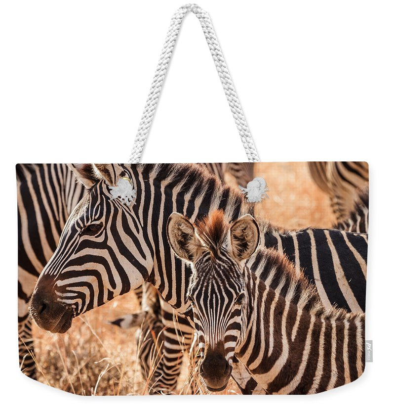 3scape Weekender Tote Bag featuring the photograph Zebras by Adam Romanowicz